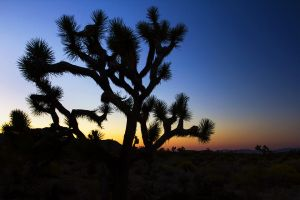 Joshua Tree Sunset.jpg